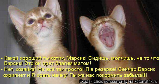 Котоматрица: - Какой хороший ты котик, Марсик! Сидишь, молчишь, не то что  Барсик! Это он орёт благим матом! - Нет, хозяйка! Не всё так просто! Я в резерве! Сей