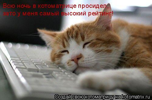 Котоматрица: Всю ночь в котоматрице просидел, зато у меня самый высокий рейтинг!