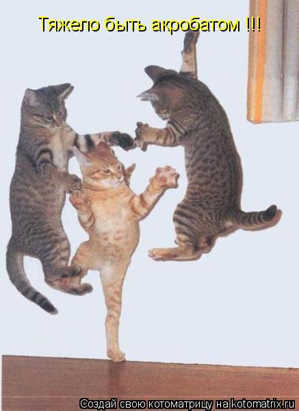 Котоматрица: Тяжело быть акробатом !!!