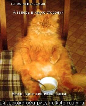 Котоматрица: ты меня накормил  А теперь в какую сторону? Вон в плите листик колбаски.