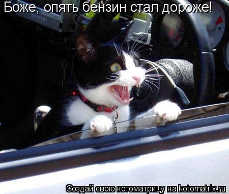 Котоматрица: Боже, опять бензин стал дороже!