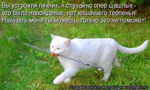 Котоматрица: Вы устроили пикник, я случайно спёр шашлык - это было навожденье, нет кошачьего терпенья! Наказать меня ты можешь, только это не поможет!