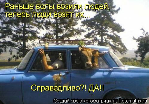 Котоматрица: Раньше волы возили людей, теперь люди возят их... Справедливо?! ДА!!
