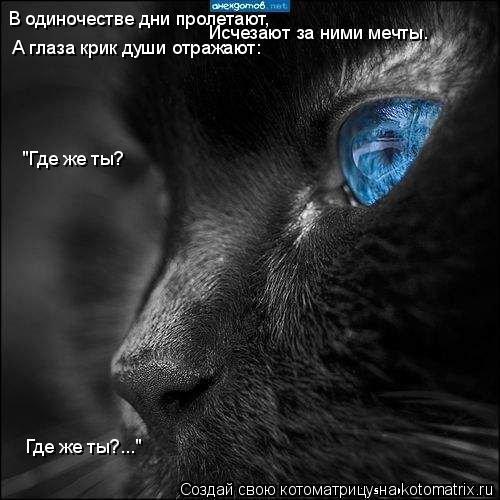 """Котоматрица: В одиночестве дни пролетают, Исчезают за ними мечты. А глаза крик души отражают: """"Где же ты? Где же ты?..."""""""