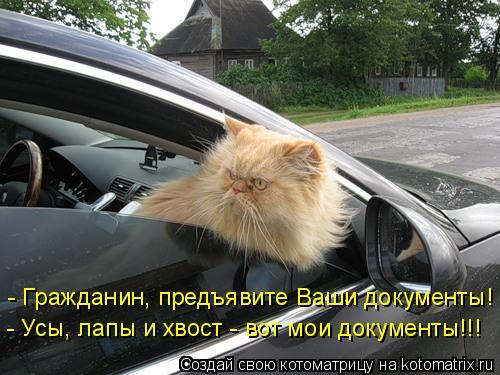 Котоматрица: - Гражданин, предъявите Ваши документы! - Усы, лапы и хвост - вот мои документы!!!