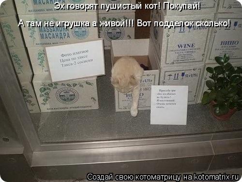 Котоматрица: Эх говорят пушистый кот! Покупай! А там не игрушка а живой!!! Вот подделок сколько!