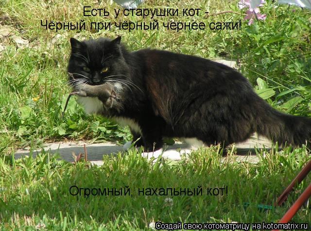 Котоматрица: Есть у старушки кот - Чёрный при чёрный чернее сажи! Огромный, нахальный кот!