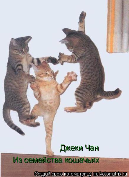Котоматрица: Джеки Чан Из семейства кошачьих