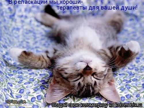 Котоматрица: В реласкации мы хороши- терапевты для вашей души!