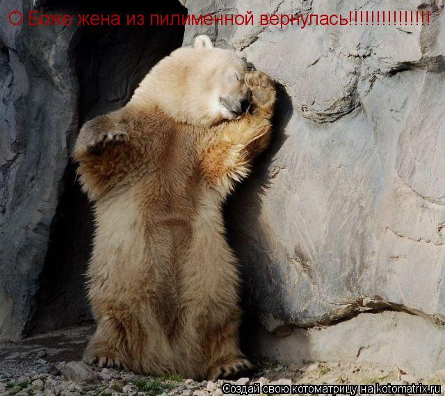 Котоматрица: О Боже жена из пилименной вернулась!!!!!!!!!!!!!!!