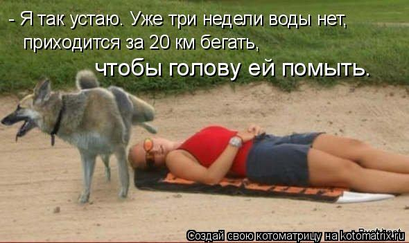 Котоматрица: - Я так устаю. Уже тpи недели воды нет, пpиходится за 20 км бегать, чтобы голову ей помыть.