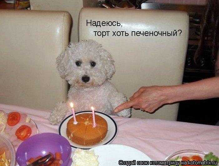 Котоматрица: Надеюсь,  торт хоть печеночный?