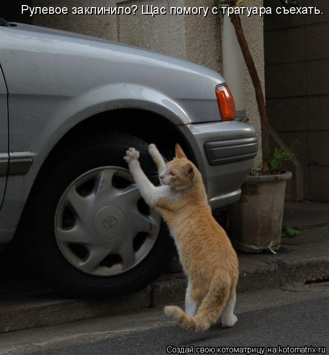 Котоматрица: Рулевое заклинило? Щас помогу с тратуара съехать.
