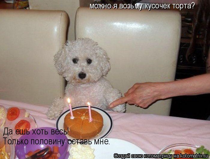 Котоматрица: можно я возьму кусочек торта? Только половину оставь мне. Да ешь хоть весь!