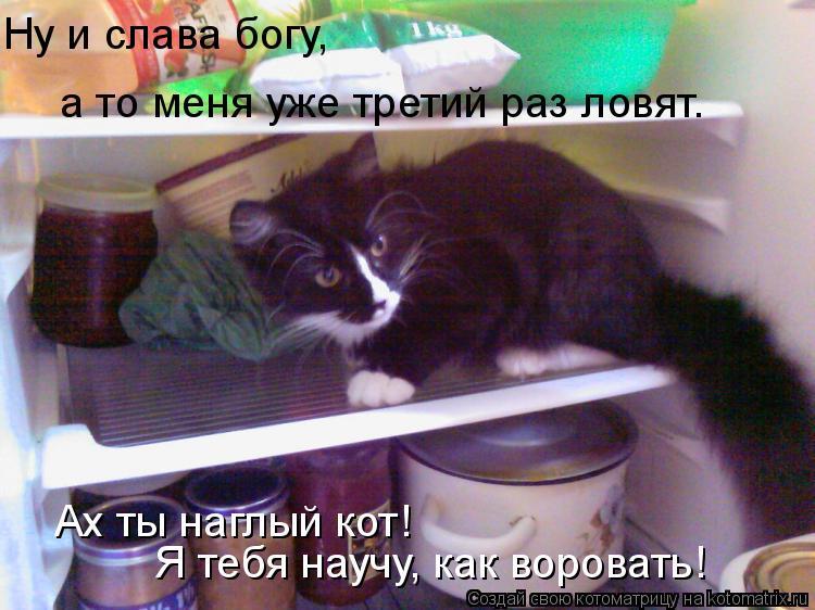 Котоматрица: Я тебя научу, как воровать! Ну и слава богу, а то меня уже третий раз ловят. Ах ты наглый кот!