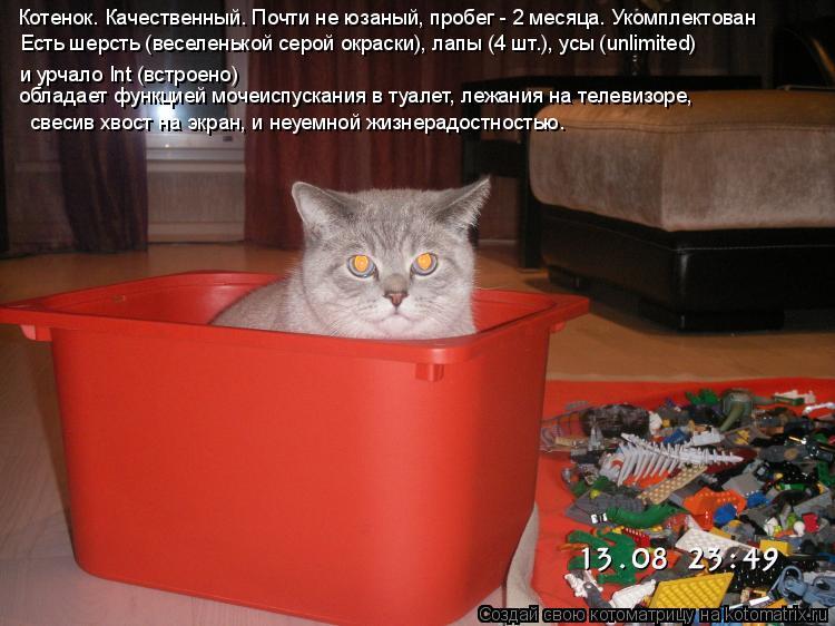 Котоматрица: Котенок. Качественный. Почти не юзаный, пробег - 2 месяца. Укомплектован и урчало Int (встроено) обладает функцией мочеиспускания в туалет, леж