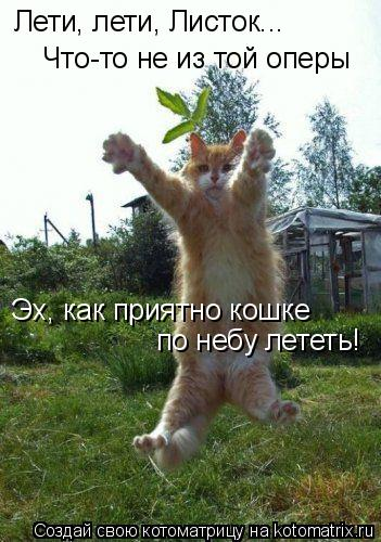 Котоматрица: Лети, лети, Листок... Что-то не из той оперы Эх, как приятно кошке по небу лететь!
