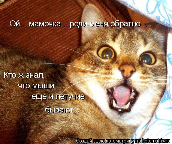 Котоматрица: Ой... мамочка... роди меня обратно... Кто ж знал,  что мыши еще и летучие бывают...