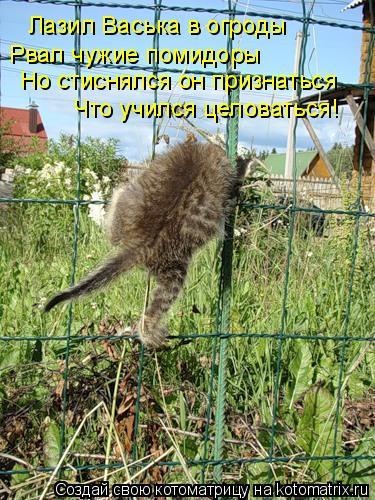 Котоматрица: Лазил Васька в огроды Рвал чужие помидоры Но стиснялся он признаться  Что учился целоваться!