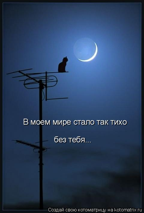 Котоматрица: В моем мире стало так тихо без тебя...