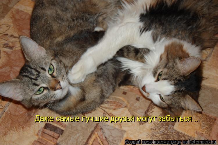 Котоматрица: Даже самые лучшие друзья могут забыться...