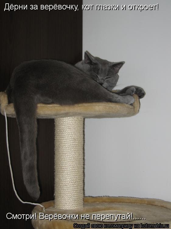 Котоматрица: Дёрни за верёвочку, кот глазки и откроет!  Смотри! Верёвочки не перепутай!......