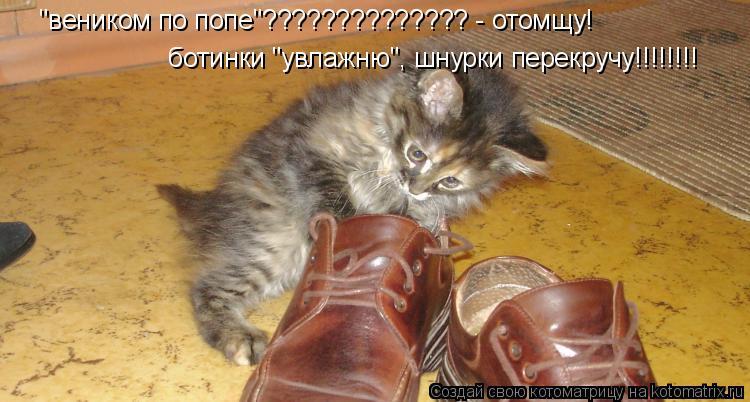 """Котоматрица: """"веником по попе""""?????????????? - отомщу! ботинки """"увлажню"""", шнурки перекручу!!!!!!!!"""