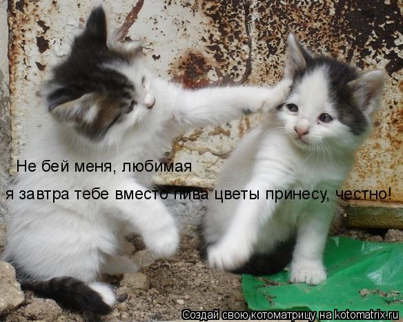 Котоматрица: Не бей меня, любимая я завтра тебе вместо пива цветы принесу, честно!