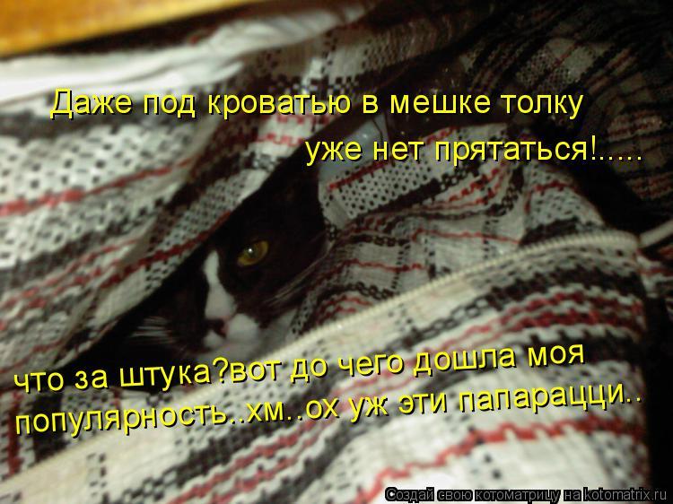 Котоматрица: Даже под кроватью в мешке толку уже нет прятаться!..... что за штука?вот до чего дошла моя популярность..хм..ох уж эти папарацци..
