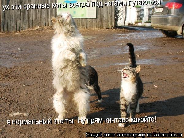 Котоматрица: ух эти сранные коты всегда под ногами путаються  я нормальный это ты. Ну прям кинтавр какойто!