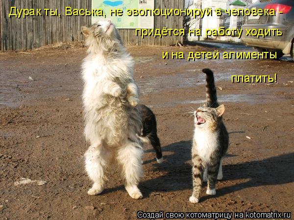 Котоматрица: Дурак ты, Васька, не эволюционируй в человека -  придётся на работу ходить и на детей алименты платить!