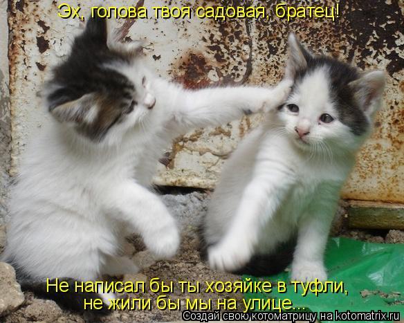 Котоматрица: Эх, голова твоя садовая, братец! Не написал бы ты хозяйке в туфли,  не жили бы мы на улице...