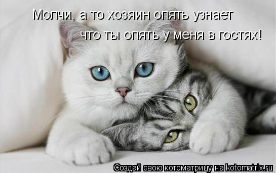 Котоматрица: Молчи, а то хозяин опять узнает  что ты опять у меня в гостях!