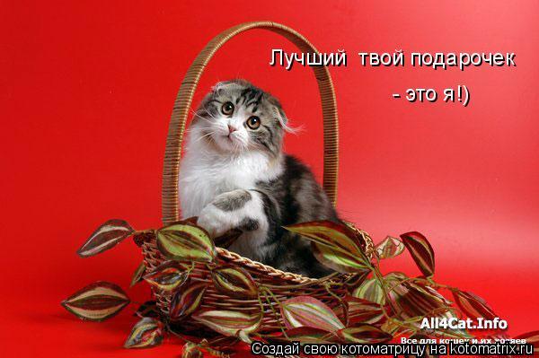 Котоматрица: Лучший  твой подарочек  - это я!)