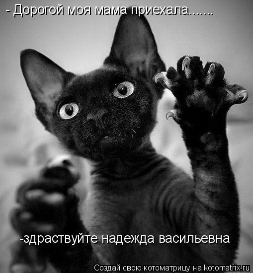 Котоматрица: - Дорогой моя мама приехала....... -здраствуйте надежда васильевна