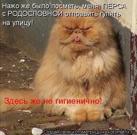 Котоматрица: Нажо же было посметь, меня, ПЕРСА с РОДОСЛОВНОЙ отправить гулять на улицу! Здесь же не гигиенично!