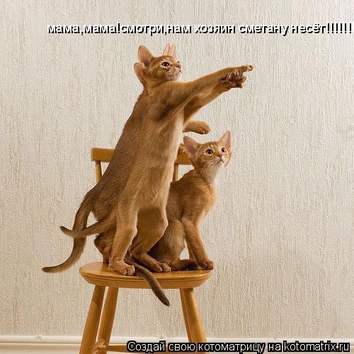 Котоматрица: мама,мама!смотри,нам хозяин сметану несёт!!!!!!!!!!!!!