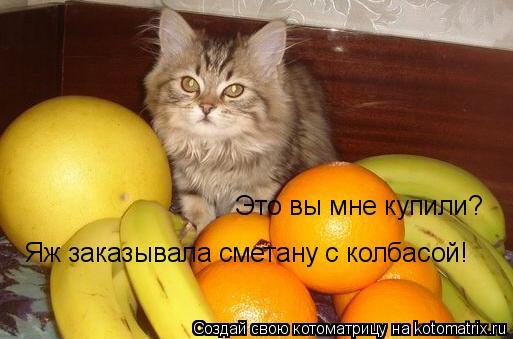 Котоматрица: Это вы мне купили?  Яж заказывала сметану с колбасой!