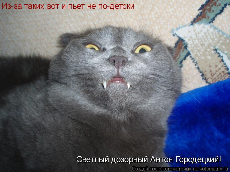 Котоматрица: Из-за таких вот и пьет не по-детски  Светлый дозорный Антон Городецкий!