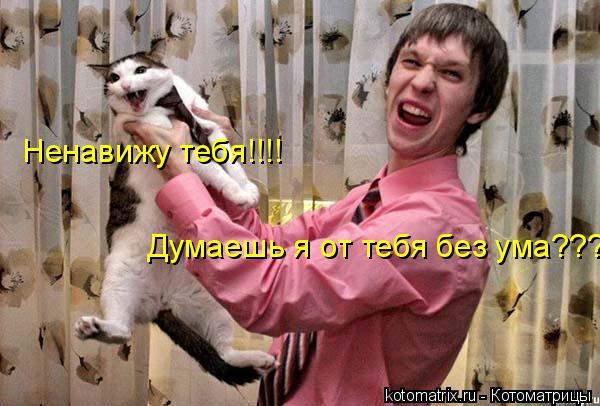 Котоматрица: Ненавижу тебя!!!! Думаешь я от тебя без ума???