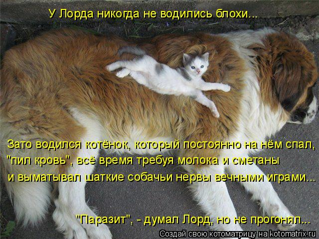"""Котоматрица: У Лорда никогда не водились блохи... Зато водился котёнок, который постоянно на нём спал, """"пил кровь"""", всё время требуя молока и сметаны """"Параз"""