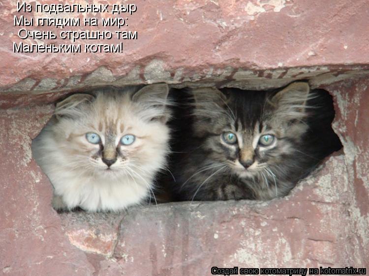Котоматрица: Из подвальных дыр Мы глядим на мир: Очень страшно там Маленьким котам!