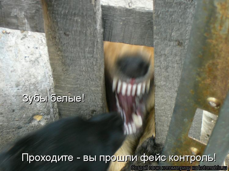 Котоматрица: Зубы белые! Проходите - вы прошли фейс контроль!
