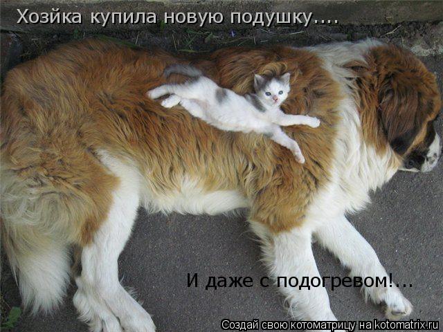 Котоматрица: Хозйка купила новую подушку.... И даже с подогревом!...