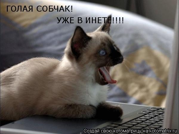 Котоматрица: ГОЛАЯ СОБЧАК! УЖЕ В ИНЕТЕ!!!!