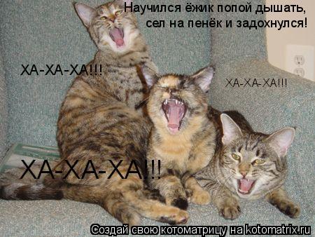 Котоматрица: Научился ёжик попой дышать, сел на пенёк и задохнулся! ХА-ХА-ХА!!! ХА-ХА-ХА!!! ХА-ХА-ХА!!!