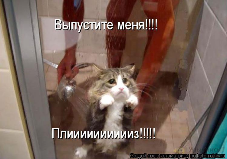 Котоматрица: Выпустите меня!!!! Плииииииииииз!!!!!