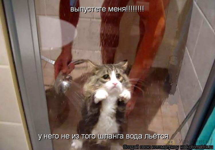 Котоматрица: выпустете меня!!!!!!!! у него не из того шланга вода льётся
