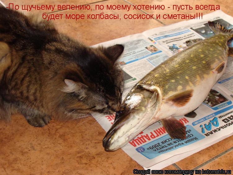Котоматрица: -По щучьему велению, по моему хотению - пусть всегда будет море колбасы, сосисок и сметаны!!!