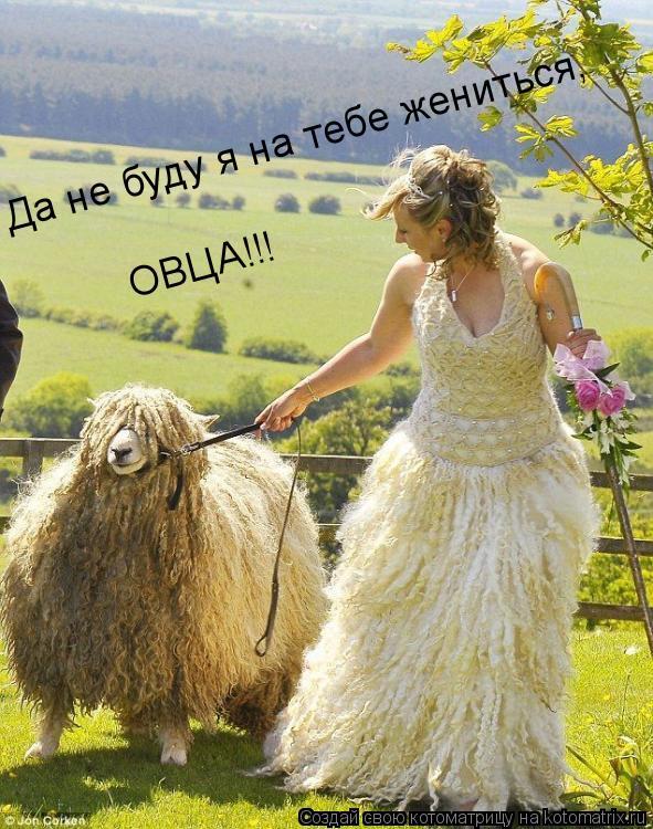 Котоматрица: Да не буду я на тебе жениться, ОВЦА!!!
